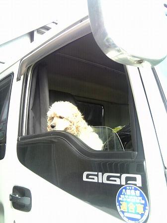 20090530 犬.jpg