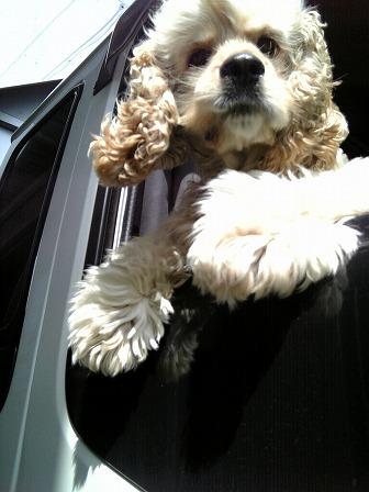 20090530 犬 (1).jpg